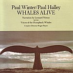 Paul Winter Whales Alive