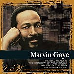 Marvin Gaye Collections
