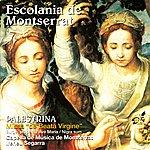 """Ireneu Segarra Palestrina: Missa """"De Beata Virgine"""", Surge Propera - Escolania De Montserrat"""