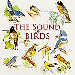 Nature Sounds The Sound Of Birds
