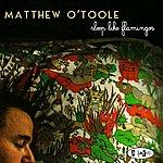Matthew O'Toole Sleep Like Flamingos
