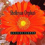 Shelleyan Orphan Century Flower
