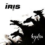 Iris Hydra