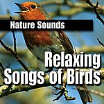 Nature Sounds Relaxing Songs of Birds