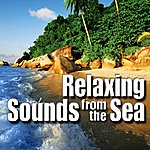 Nature Sounds Relaxing Sounds from the Sea