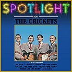 The Crickets Spotlight On The Crickets