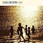 Luka Bloom Tribe