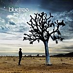 Blue Tree God Of This City