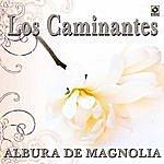 Los Caminantes Albur De Magnolia