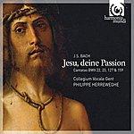 Philippe Herreweghe J.S. Bach: Jesu, Deine Passion