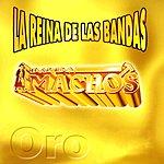 Banda Machos La Reina De Las Bandas, Vol.1