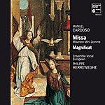 Philippe Herreweghe Cardoso: Missa Miserere Mihi Domine