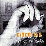 Discordia Versos De Rabia