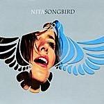 Nita Songbird