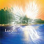 Lucyan Like The Birds