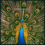 The Bluetones Expecting To Fly (Expanded Edition)