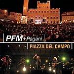 PFM Piazza Del Campo Live In Siena