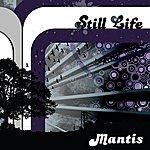 The Mantis Still Life