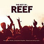 Reef The Best Of
