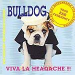 Bulldog Viva La Headache!