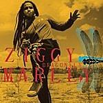 Ziggy Marley Dragonfly
