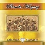 Banda Maguey Coleccion Diamante