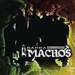 Banda Machos El Sonidito (Ruidito) (Single)