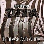 Zebra The Best Of Zebra In Black And White