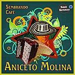 Aniceto Molina Sembrando Cafe