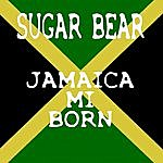 Sugar Bear Jamaica Mi Born