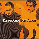 Danko Jones Born A Lion