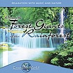 Dave Miller Tranquil World - Under The Forest Giant Of The Rainforest