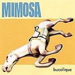 Mimosa Bucolique