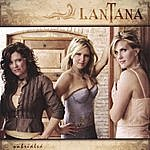 Lantana Unbridled