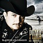 El Puma De Sinaloa El Amo De Los Caballos