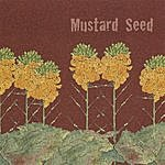 Mustard Seed Mustard Seed