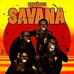 Appaloosa Savana