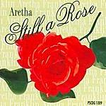 Studio Musicians Aretha Franklin - Still A Rose Hits