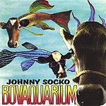 Johnny Socko Bovaquarium