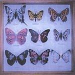 Hoonose Man Made Butterflies