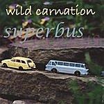 Wild Carnation Superbus