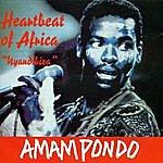 Amampondo Heartbeat Of Africa Uyandibiza