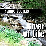 Nature Sounds River Of Life (Nature Sound)