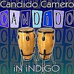 Candido Camero Candido In Indigo