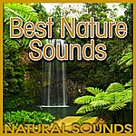 Natural Sounds Best Nature Sounds (Nature Sound)