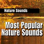 Nature Sounds Most Popular Nature Sounds