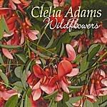 Clelia Adams Wildflowers