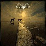 Coyote Harlyn Bay