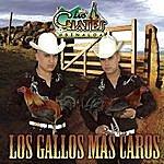 Los Cuates De Sinaloa Los Gallos Más Caros