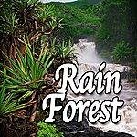 Natural Sounds Rain Forest (Nature Sounds)